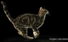 Whiskas Cat Network Commercials