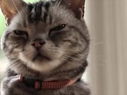 Friskies Viral Video: Dear Kitten