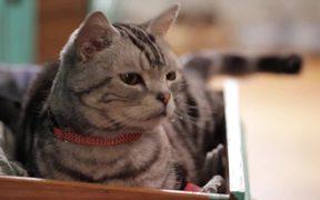 Friskies Viral Video: Dear Kitten