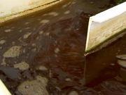 Microalgae-to-Biofuel Technology B-Roll