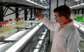 Microalgae-to-Biofuel Technology B-Roll