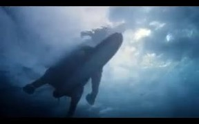 Accenture Commercial: Surfing Elephant