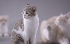 Kotex Commercial: Cat Pad