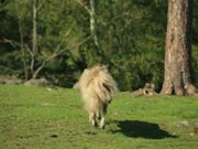 AGT Campaign: Vinnie: A Horsey Dreamjob