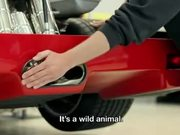 BMW Viral Video With Alex Jansen: Forza!