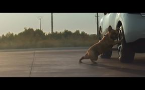 Citroën Commercial: Dog Stretching