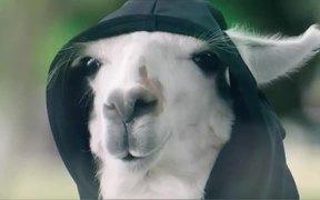 Ergon Energy: Grim Llama Fallen Powerlines