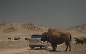 Subaru Campaign: Bison