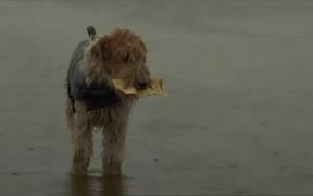"""Inspiring Short Film """"Lucky Dog"""" From NZ Lotteries"""
