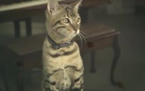 """Purina One TV Commercial """"Get Ready To Play"""""""