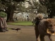"Inspiring Short Film ""Lucky Dog"" From NZ Lotteries"