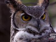 Birds of Prey Close Up