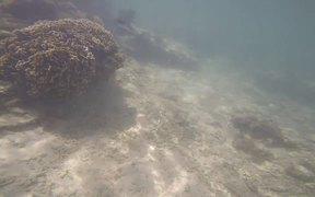 Underwater Video Taken in Uganzaki Beach