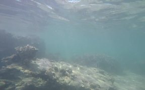 Underwater Video Taken in Uganzaki Beach