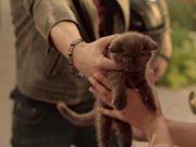 Nestle Campaign All I Want is Chocolate Kitten