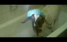 EE Commercial: Screaming Goats