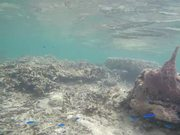 Snorkelling with Little Blue Fishes