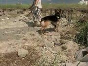 K-9s Dig Training