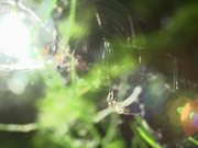 Spider, Web, and Fly in Macro View