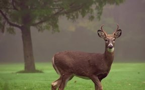 Young 4-Point Buck