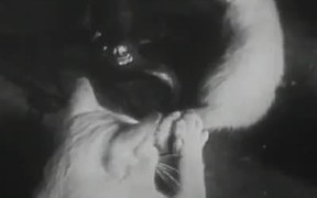 The Unique Documentary Footage of Cat's Life