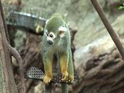 Small Monkey I