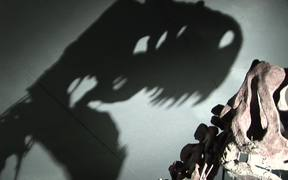 Dinosaur in Museum