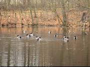 Nice Ducks