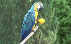 Papageien Bleu