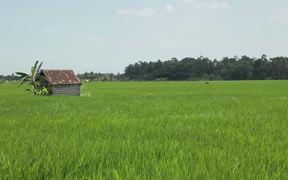 Bali - Rice Field