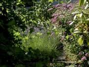 Some Gardening/Flower Stuff