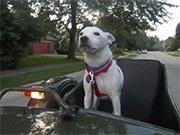 Sidecar Skippy