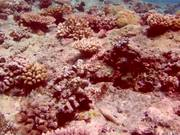 Pretty Reefs of Palau