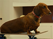 Wiener-Dog Official Trailer