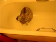 Murphy Chillin In The Bath Xvid