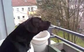 Dog Imitates Siren