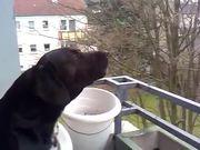 Dog Imitates Siren