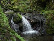 Along Gordon Creek Waterfall