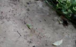 Ant Death Circles
