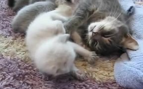 Sweet Little 3 Week Old Baby Cats