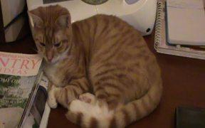 A Ginger Cat Relaxing