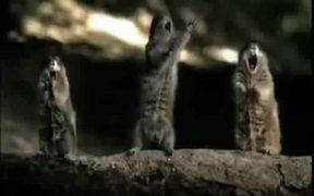 Frightened Animals