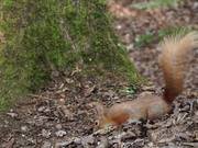 Squirrels at Alverstone Mead