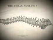 Bones TV Series Trailer