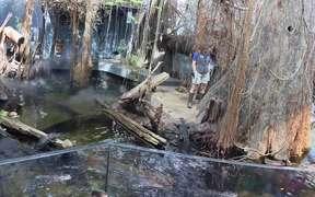 Alligator Bayou Feeding Time