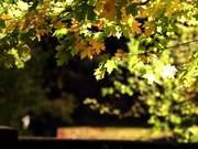 Fall Branch