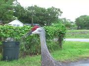 The Big Funny Bird
