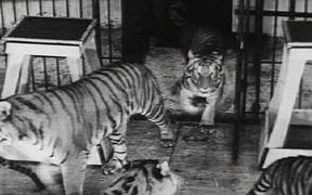 Coney Island - Wild Tiger Act 1940