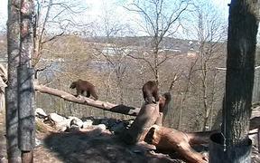 Urban Animals Bear
