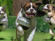 Coors Light - Refreshmutts